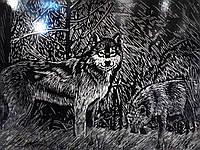 """Гравюра Премиум """"Волк"""" (серебро)"""