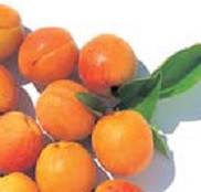 Абрикосовая крошка (гранулир.косточка)