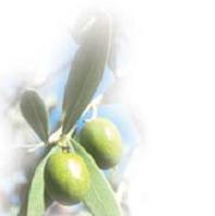 Оливковый скраб (гранулир.косточка)