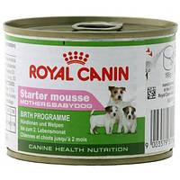 Royal Canin STARTER MOUSSE  влажный корм для щенков и сук при беременности и лактации (мусс) 0,195КГ
