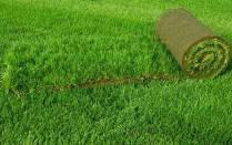 Рулонный газон Универсальный. Газон в рулонах, фото 3