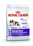 Royal Canin Gigant Starter (щенки до 2 месяцев, беременные и кормящие суки)