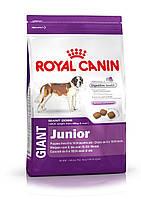 Royal Canin Giant Junior корм для щенков с 8 месяцев