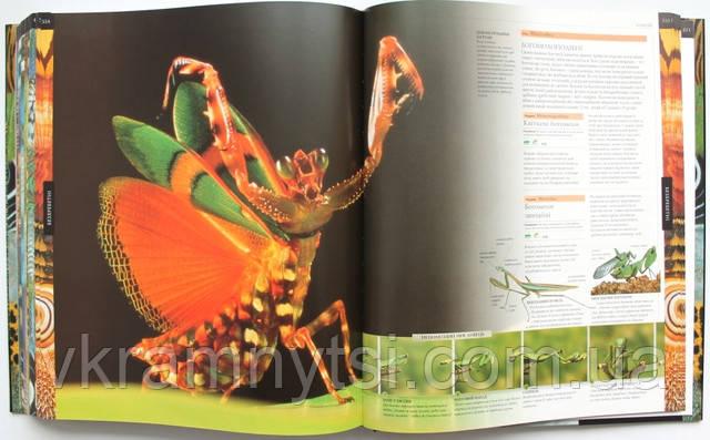 Энциклопедии, детские книги купить онлайн