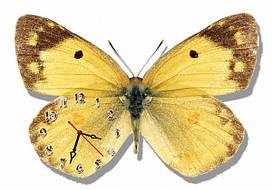 Часы настенные- картина бабочка 3) 30х45 см