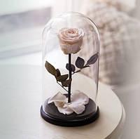 Роза в Колбе Белый Бриллиант 7 карат