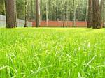 Особенности полива газонов