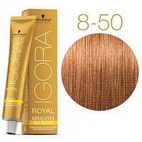 Igora Royal Absolutes - Крем краска для волос 8-50 Светло-русый золотистый натуральный, 60 мл