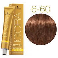 Igora Royal Absolutes - Крем краска для волос 6-60 Темно-русый шоколадный натуральный, 60 мл