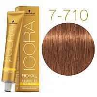 Igora Royal Absolutes - Крем краска для волос 7-710 Средне-русый медный сандрэ, 60 мл