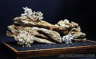 """Композиция """"Коралловый риф"""" для цихлидника, фото 1"""