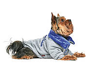 Толстовка Pet Fashion Фред для собак, фото 1