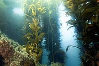 Антивозрастная косметика на основе биоресурсов Мирового океана