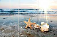 Картина модульная 3 части Астериас рубенс и море Eclipse