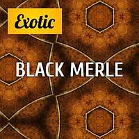Ароматизатор Экзотик Black Merle (5 мл) Exotic ароматизатор