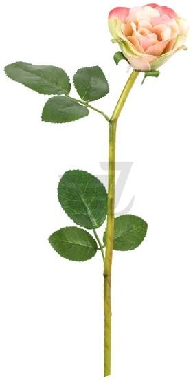 Растение декоративное Роза 726145 - Bighause в Киеве