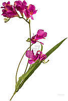 Растение декоративное Фрезия 4179 PUR