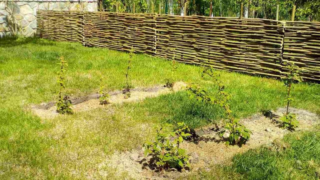 Малиновый сад