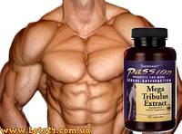 Трибулус (120 капсул) - повышает тестостерон, растительный анаболик + программа тренировок