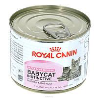 Royal Canin BABYCAT INSTINCTIVE (БЕБИКЕТ ИНСТИНКТИВ) Влажный корм для котят с рождения до 4 месяцев  0,195КГ
