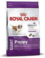ROYAL CANIN GIANT PUPPY (ЩЕНКИ ГИГАНТСКИХ ПОРОД) корм для щенков от 2-8 месяцев 1КГ