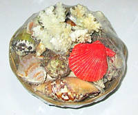 Набор ракушек с кораллом 500 гр.