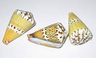 Ракушка морская Виг-Вам 5-6 см