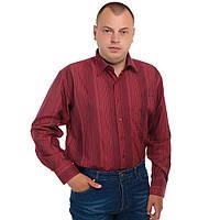 Рубашка мужская батал Boscado ВТТ557