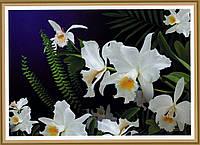 Фотообои, Дикая орхидея, 16 листов, размер 194х268 см