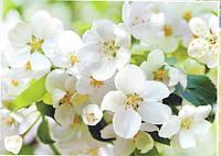 Фотообои, весна, цветущее дерево, сакура, яблоня в цету, светлый,  ПРЕСТИЖ №10 272смХ196см