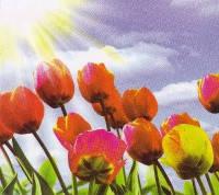 Фотообои, Тюльпаны 6 листов, 140х145см