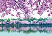 Фотообои, весна, цветущее дерево, речка, ПРЕСТИЖ №8 196смХ136см