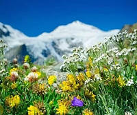 Ароматизатор Альпийские травы 20грамм, 1кг, 25кг