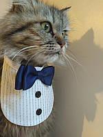 Галстук-бабочка с манишкой  для котика или собачки.