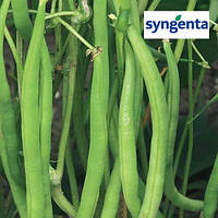 Фасоль Серенгети / Serengeti от Сингента (Syngenta), 100 000 семян