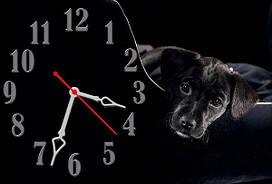 Часы настенные Z43 30х45 см