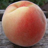 Саженцы персика Белый Лебедева