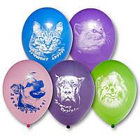 """Воздушные шары Лучшему другу 12"""" (30 см), 50 штук в упаковке Belbal Бельгия"""