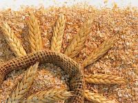 Отруби пшеничные от 5 кг