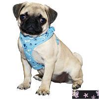 """Шлея Coastal Lit""""l Pals Soft Mesh для собак мягкая с косточками, 25-40 см"""