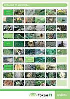 Вредители и болезни цветной капусты