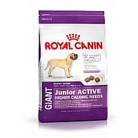 ROYAL CANIN GIANT JUNIOR ACTIVE (ЮНИОРЫ ГИГАНТСКИХ ПОРОД АКТИВ) корм для щенков от 8-24 месяцев 15КГ
