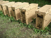 Пчелопакеты КАРПАТКА 2020, фото 1