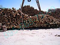 Продам лес кругляк сосна(сухостой)