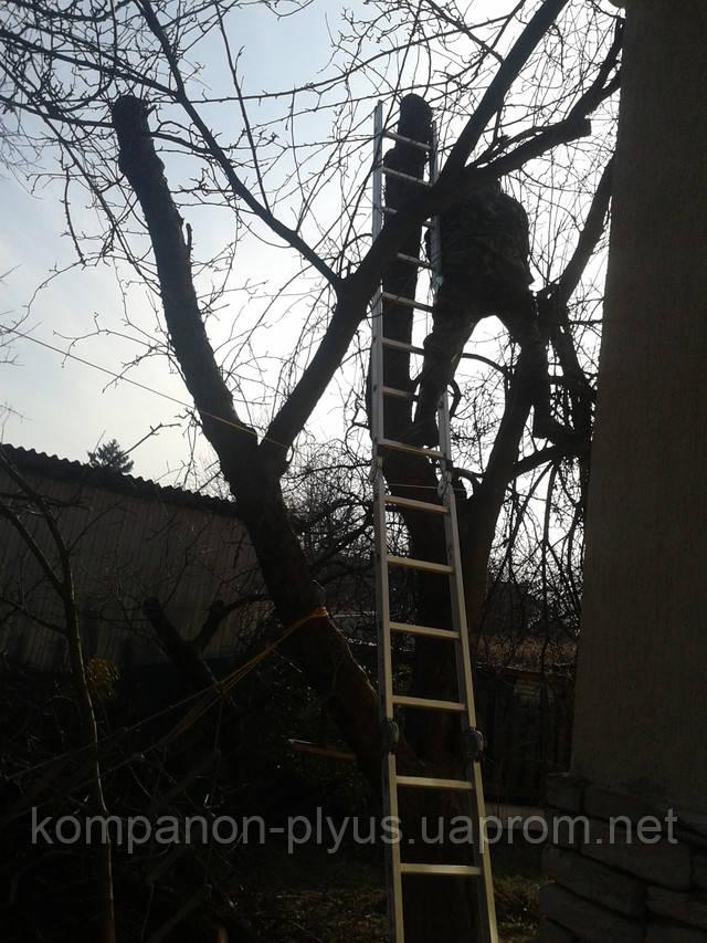 Удаление сада. Спил плодового сада. Валка фруктовых деревьев. Срезание деревьев в саду. Выкорчевывание корней деревьев. Удаление и вывоз пней с участка.