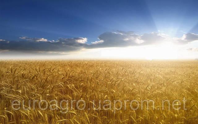 Вести с полей: сколько яровых зерновых успели посеять украинские фермеры.