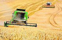 Мировое производство зерновых: последние оценки.
