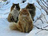 Средства от глистов для кошек и котят