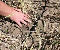Гидрометцентр предупреждает - грядет засуха