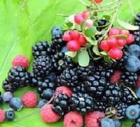 Ароматизатор Лесные ягоды 20грамм, 1кг, 25кг